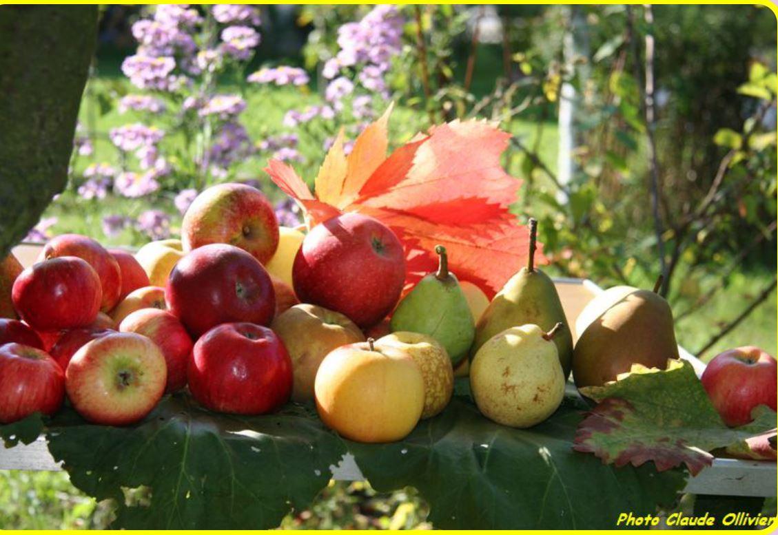 Photo issue du site internet des Croqueurs de Pommes Ile-de-France