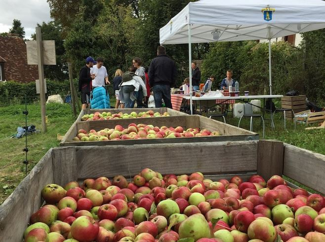 Cueillette des pommes à Saint-Prix