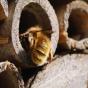 Sortie Nature-Atelier : Nichoirs pour abeilles solitaires