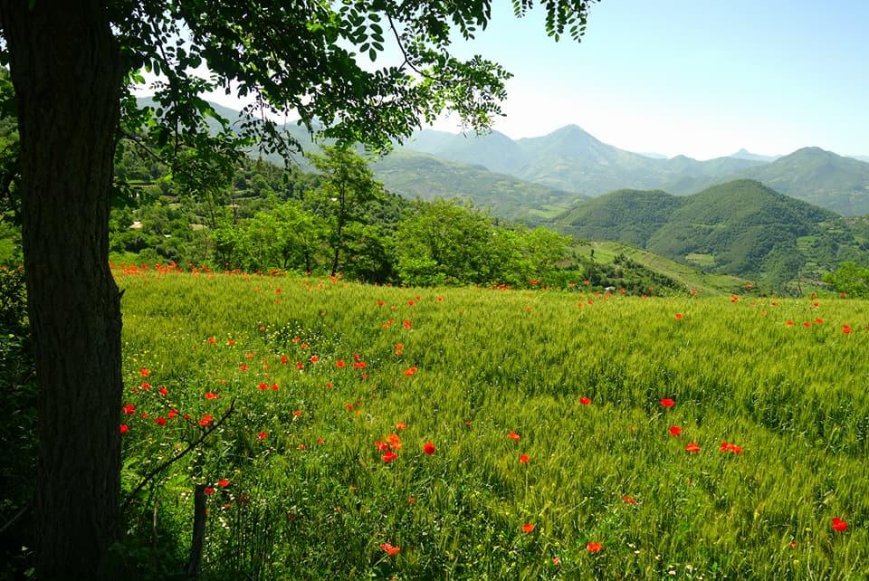 Albanie - Paysages albanais avec les coquelicots