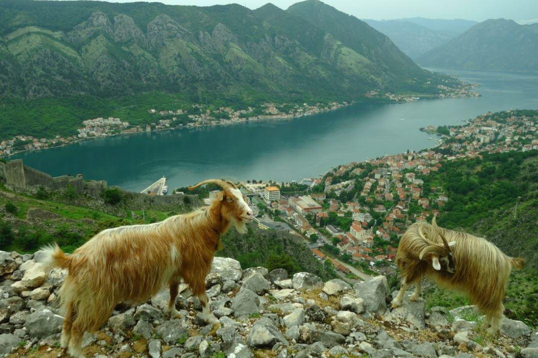 Montenegro - Vue sur la baie de Kotor