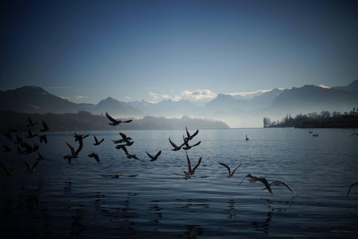 Apprentis Vagabonds - Lac de Lucerne
