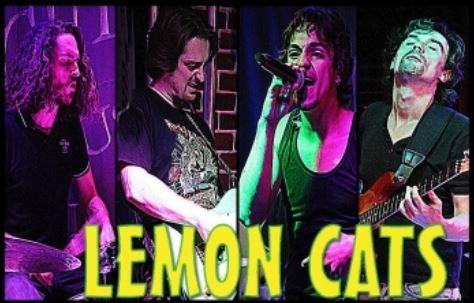 LEMON CATS