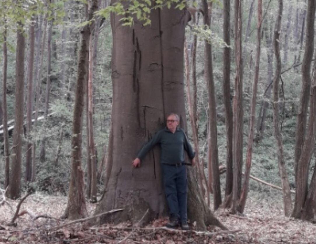 Denis Hemmer au coeur de la Forêt de Montmorency