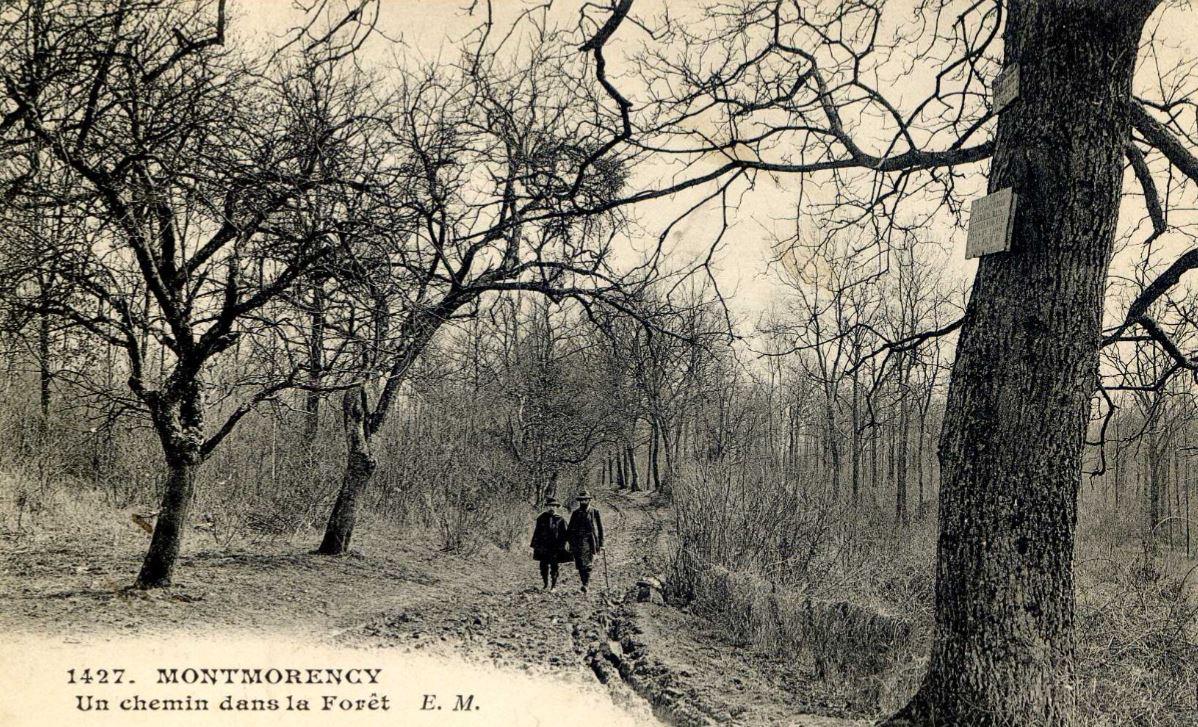 Chemin dans la Forêt de Montmorency