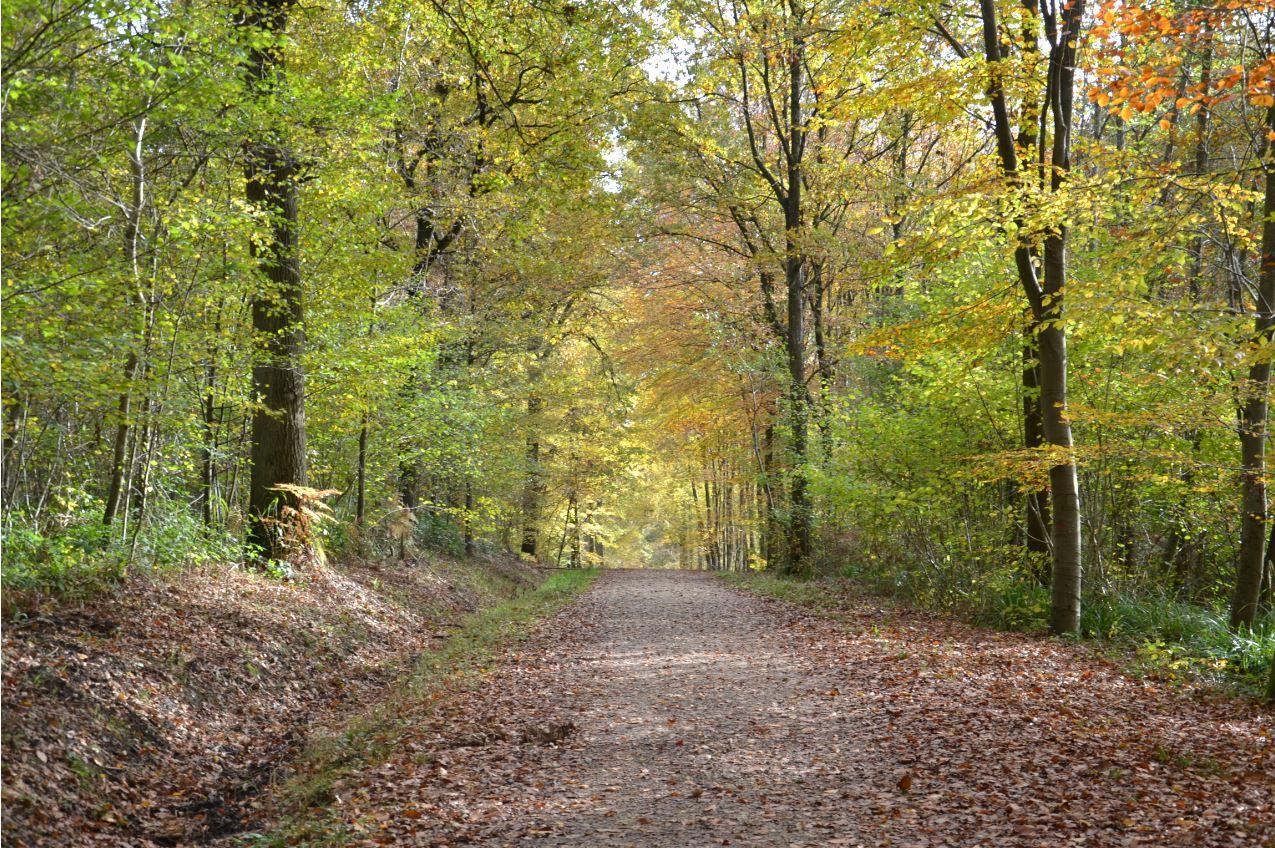Forêt de Montmorency