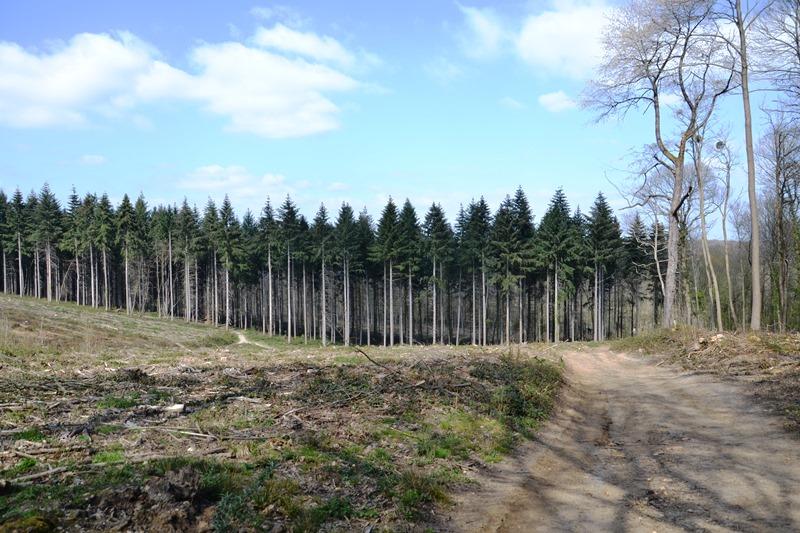 Chemin de la Grande Montagne - Saint-Prix