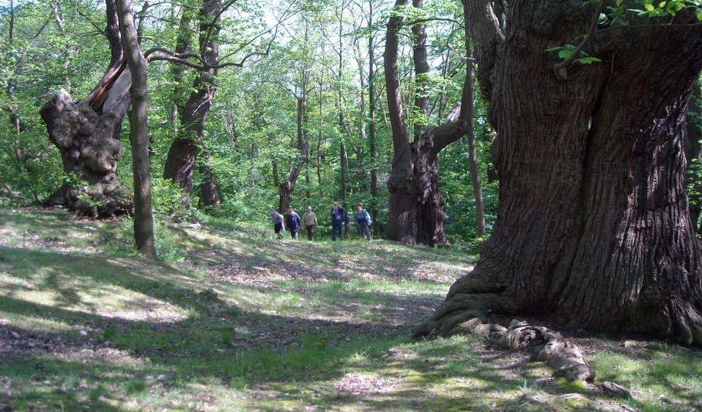 La Châtaigneraie de Montmorency (photo issue site Chemin du Philosophe)