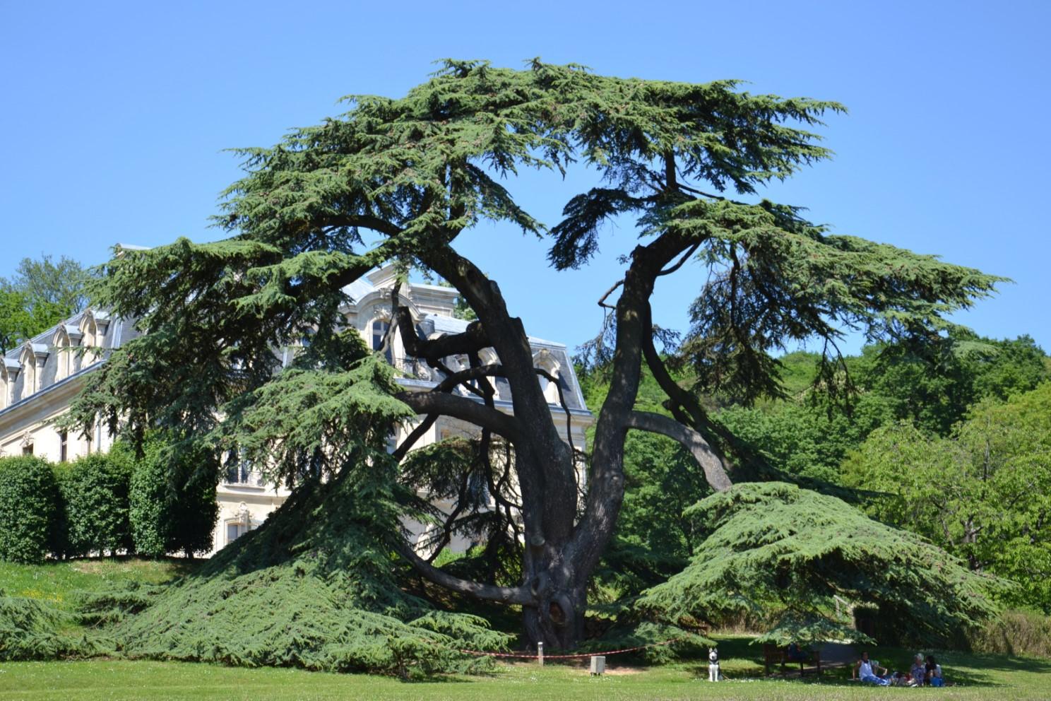 Parc du Château de la Tuyolle à Taverny