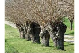 Jardinage : gestion des grands espaces... gestion différenciée !