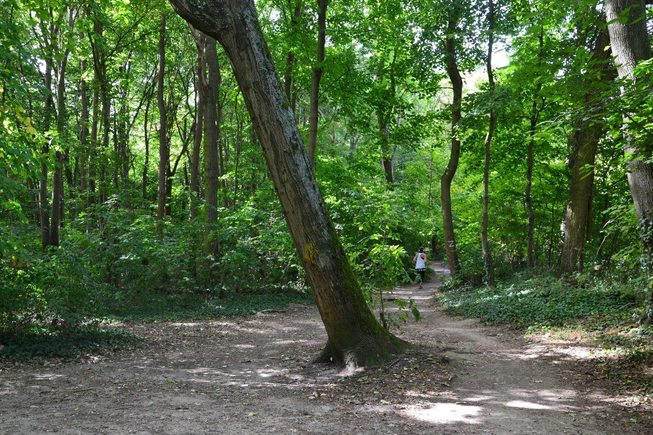 Bois de Boissy
