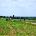 IDÉE-BALADE: découvrez Frépillon et le paysage du sentier des lisières qui longe le village.
