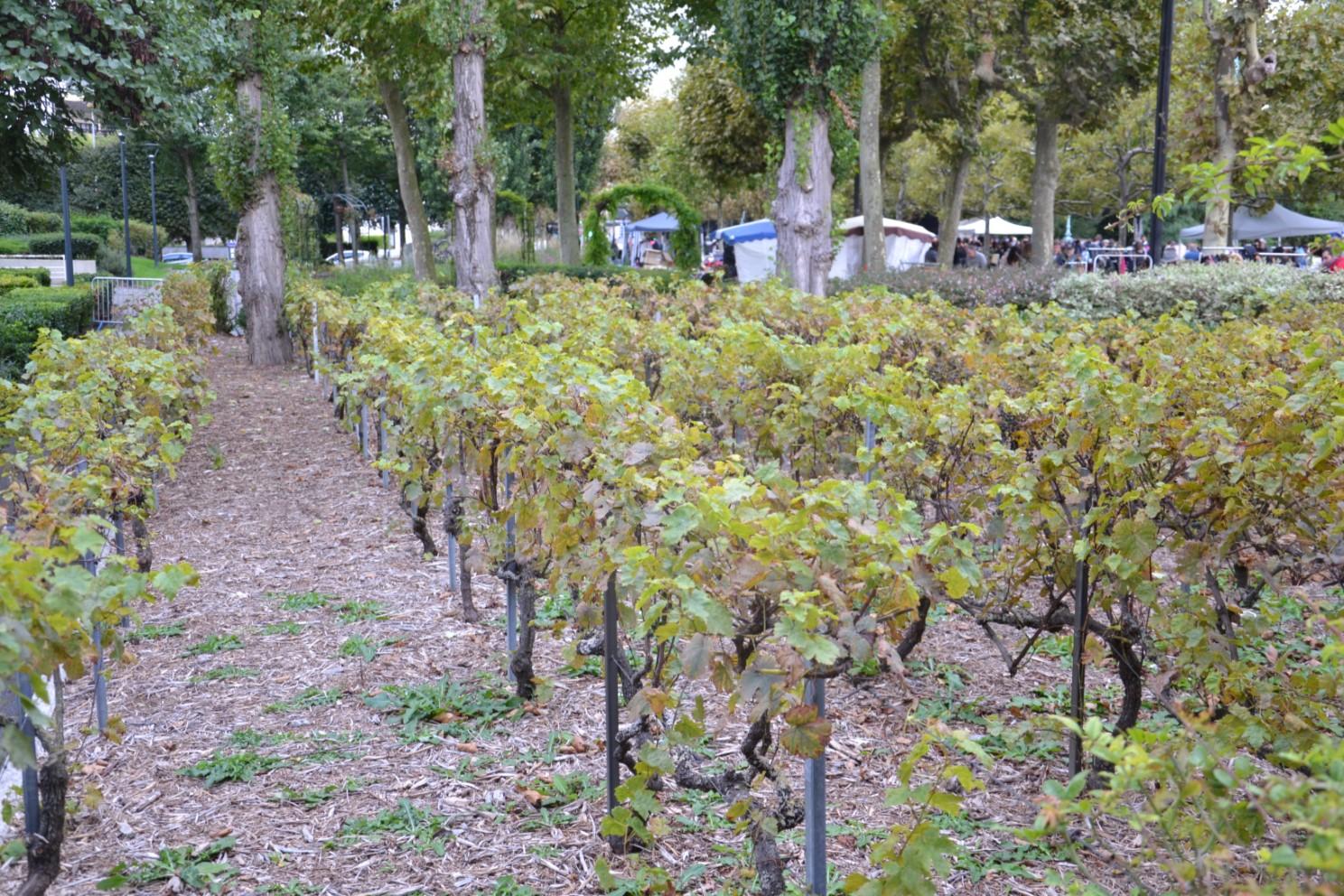 Vignes d'Enghien