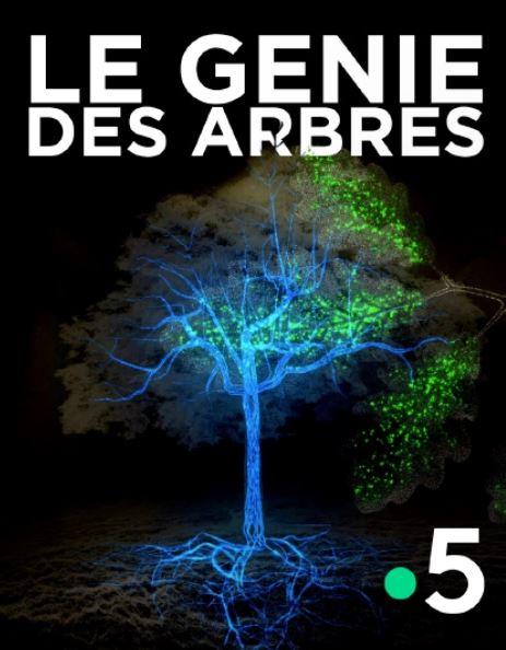 Le génie des arbres  (illustration site molotov.fr)