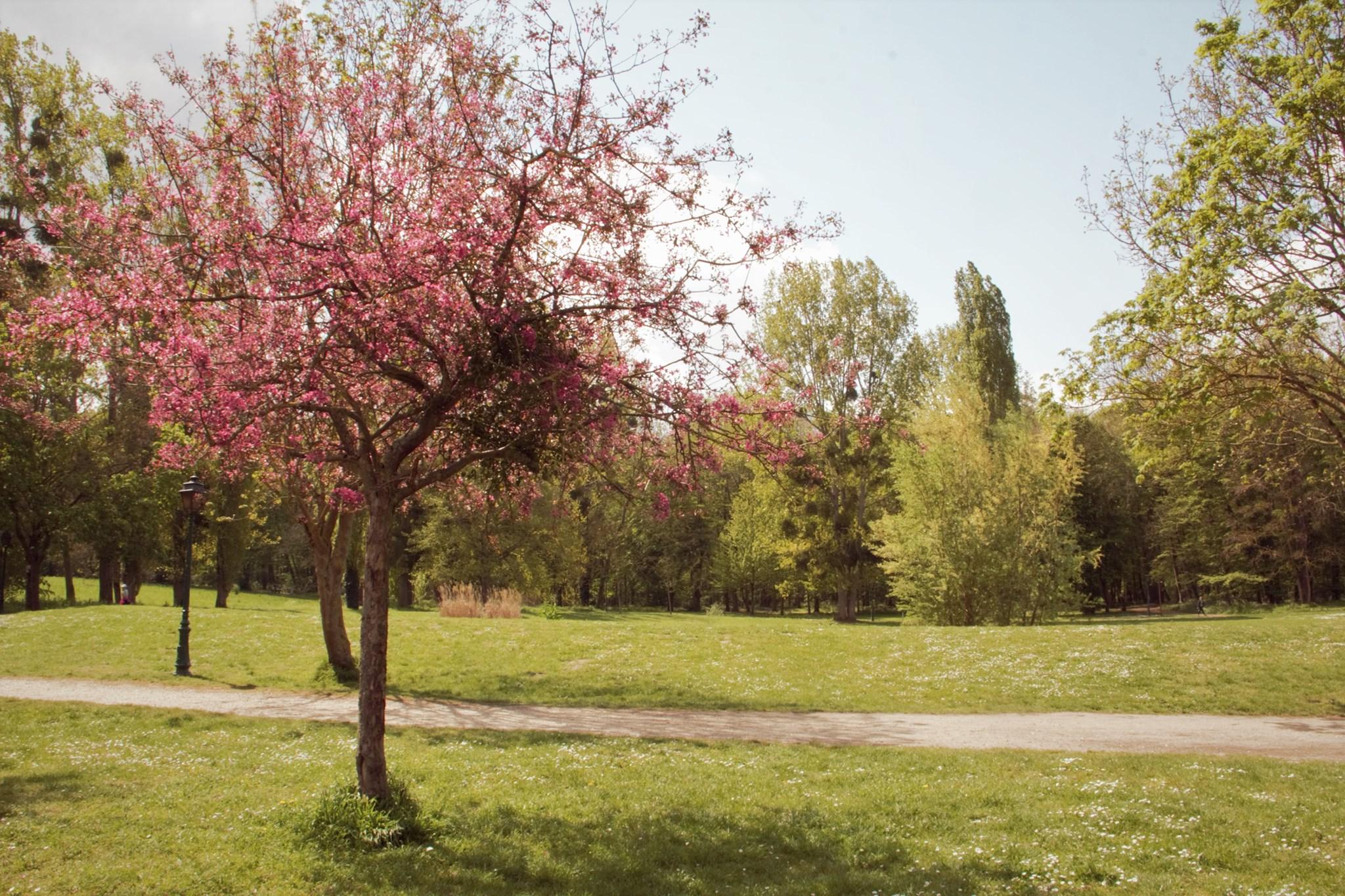 Bois des éboulures à Franconville (mai 2021 - photo de Patrick Danielou)