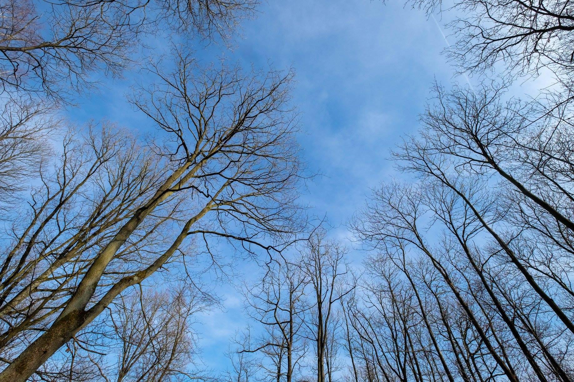 Février 2019 - Forêt de Montmorency sous le soleil précoce (photo de Jean-Pierre Even)