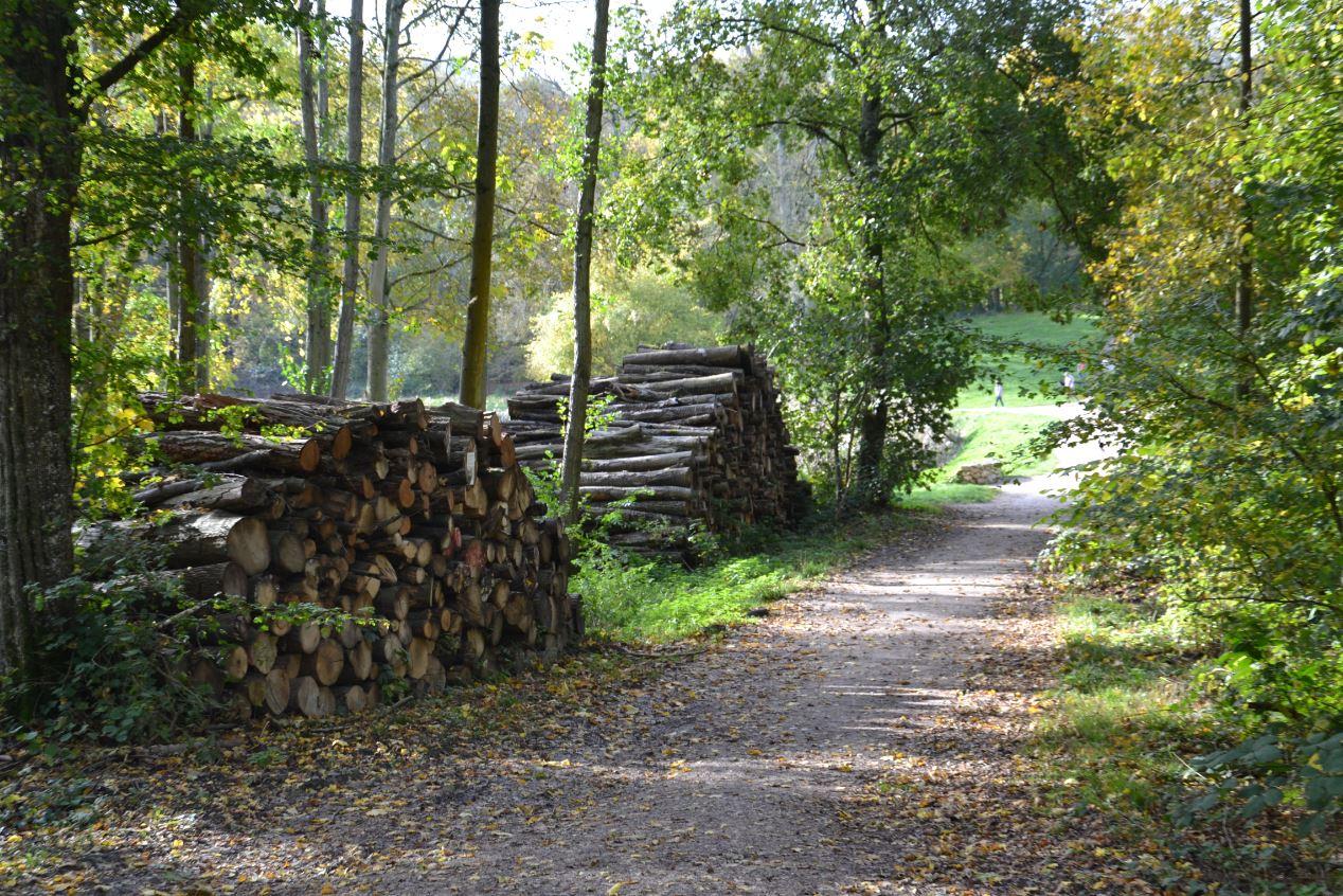 Forêt de Montmorency (novembre 2019)