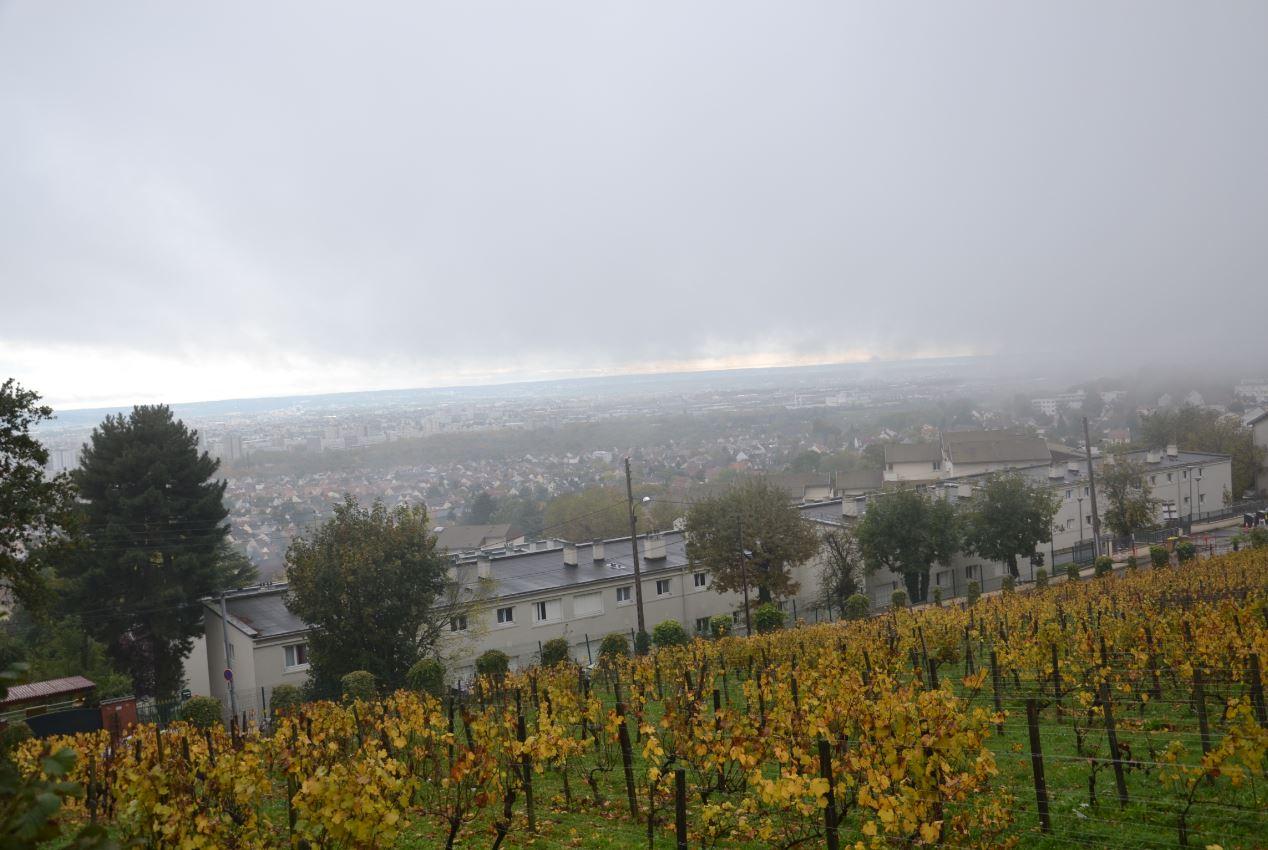 Vignes de Sannois dans le brouillard (novembre 2019)