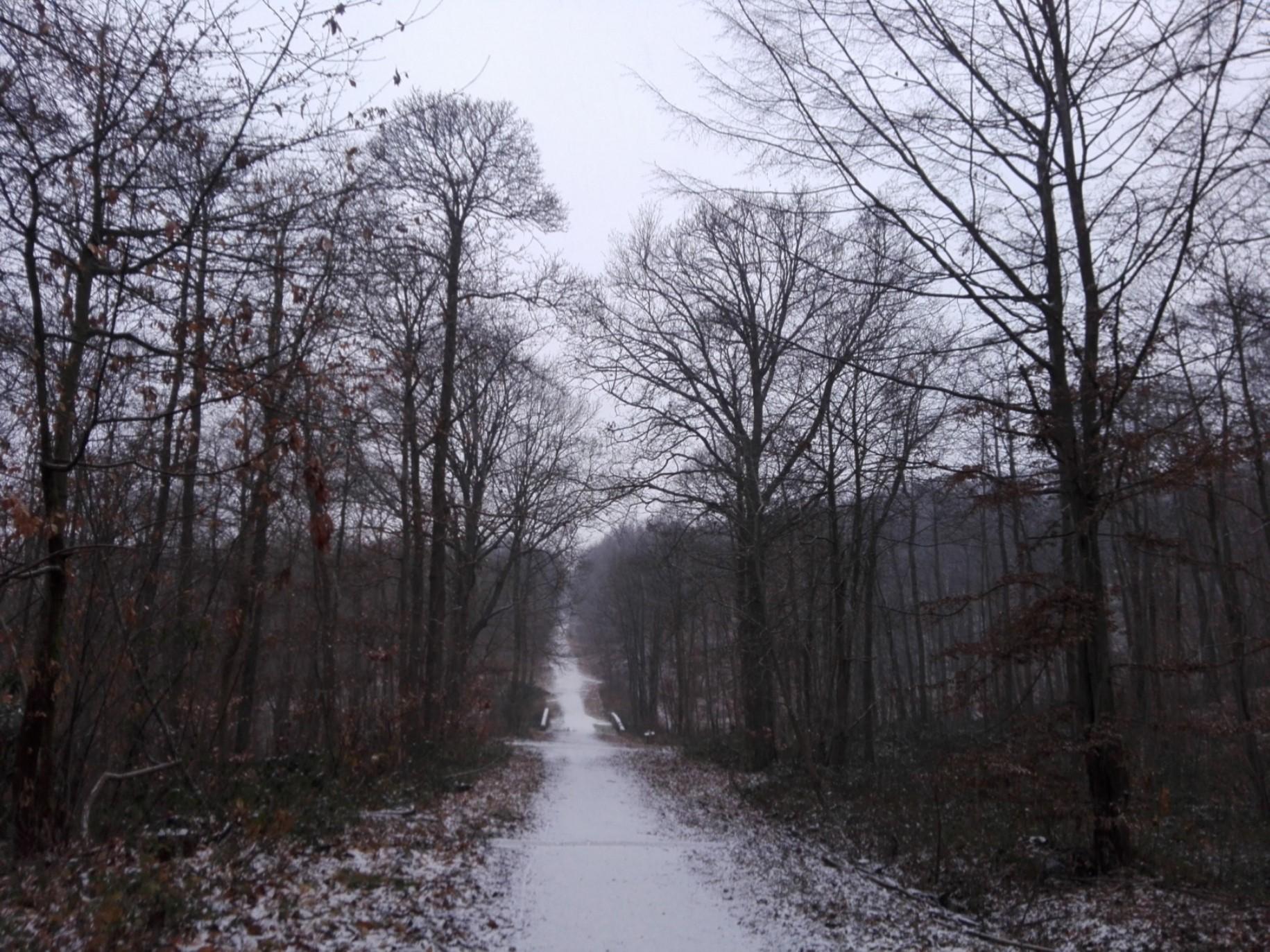 Janvier 2019 - Episode neigeux dans la Forêt de Montmorency (photo Tanja Kiorboe)