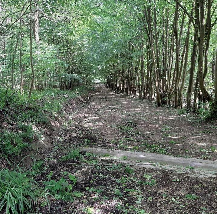 Forêt de Montmorency - photo de François Paget