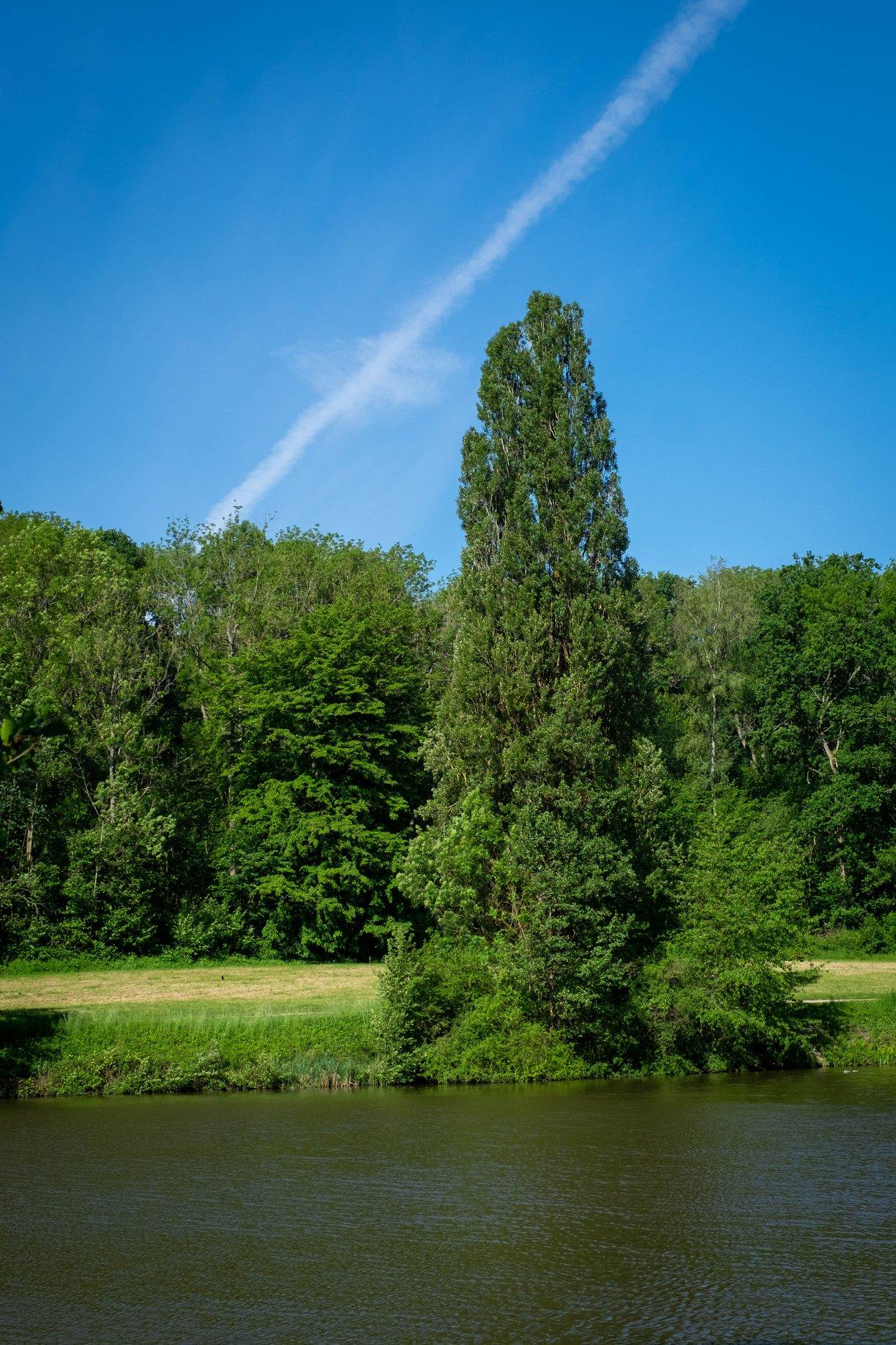Forêt de Montmorency - photo de Jean-Pierre Even