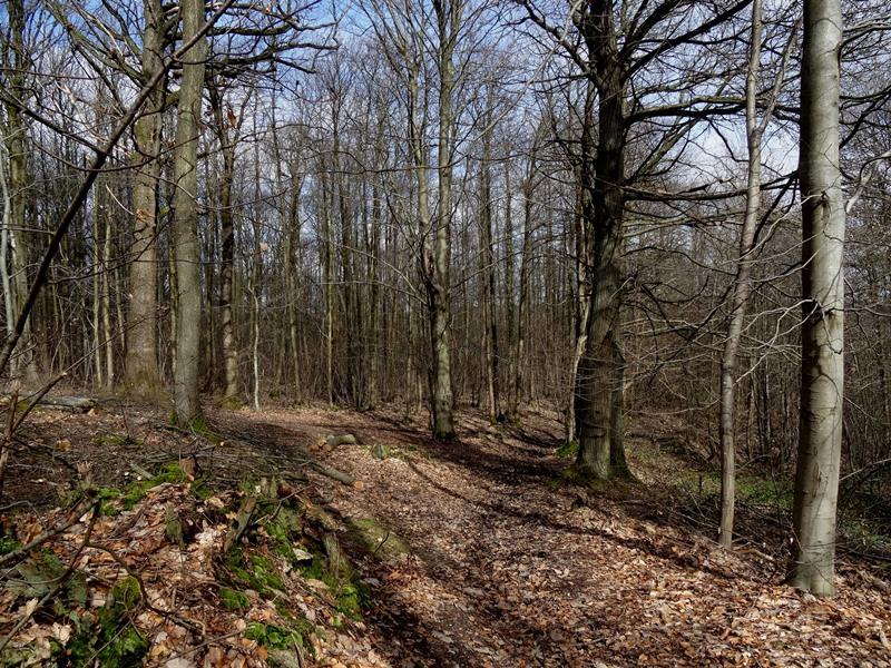 Forêt de Montmorency - (mars 2020)