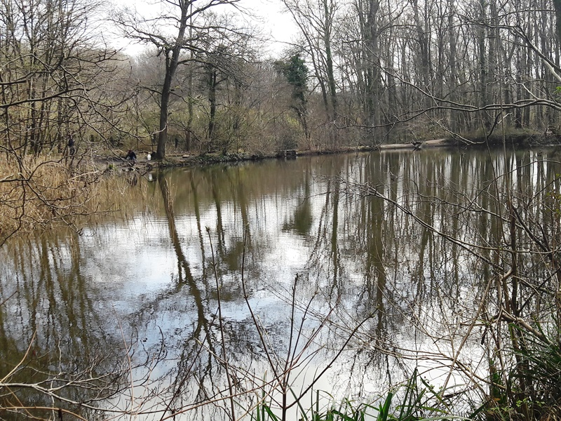 Forêt de Montmorency - L'étang Marie (mars 2020)