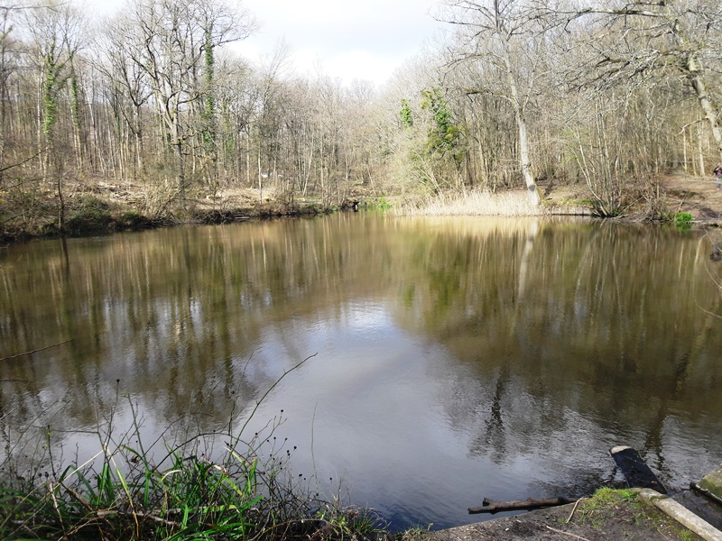 Forêt de Montmorency - Etang Marie