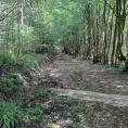 Depuis le 11 mai, nous pouvons retrouver notre chère forêt de Montmorency!