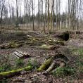 Coupes dans la forêt de Montmorency: l'ONF explique son action.