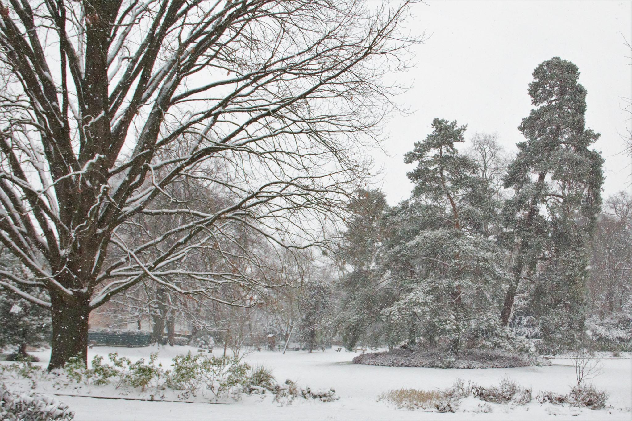 Episode neigeux - Parc du Cadet de Vaux à Franconville (janvier 2021 - photo de Patrick Danielou)