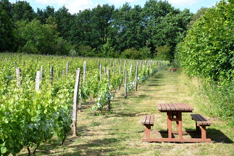 La vigne de Saint-Prix (juin 2020)